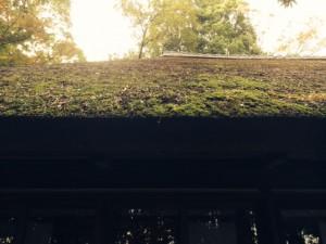 茅葺屋根2